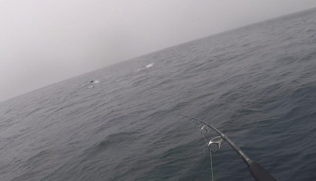 津軽海峡クロマグロキャスティング ヒットシーン